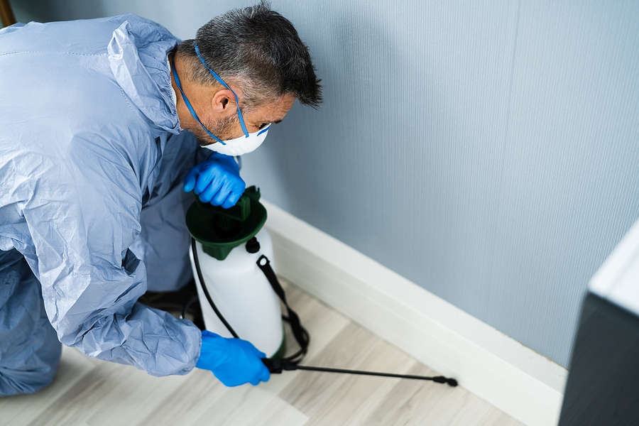 Pest control expert in Melbourne spraying termite pesticide